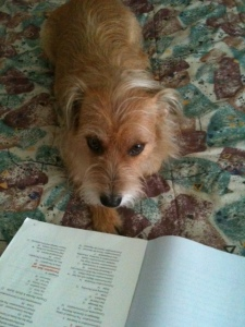 My terrier mix Levi enjoys learning.
